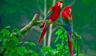 Ý nghĩa giấc mơ thấy chim