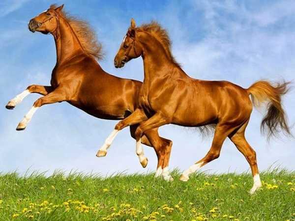 Nằm mơ thấy con ngựa điềm lành hay giữ