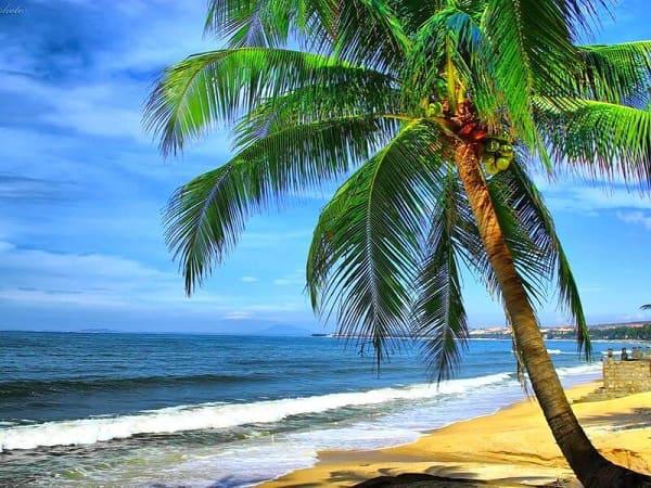 Mơ thấy cây dừa điềm báo tốt hay xấu?